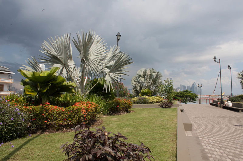 Plaza, Panama City